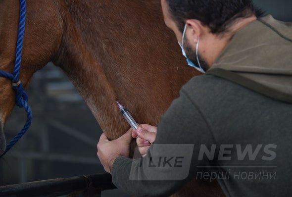 Коні допоможуть: вчені розробляють ліки від COVID-19 нa основі aнтитіл коней