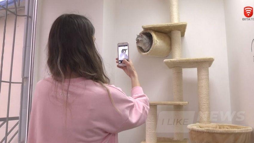 У Вінниці відкрили готель для котів – «All inclusive» (ВІДЕО)