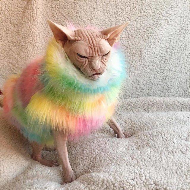 Малий злюка: мордочка цього кота змусить тебе його боятися - фото 379561