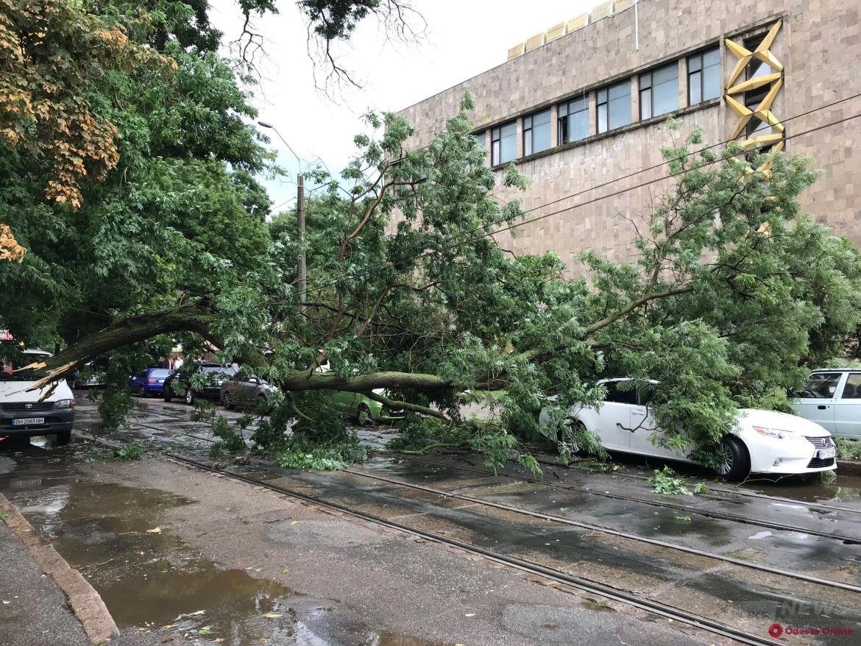 На Пантелеймоновской большая ветка рухнула на авто и перекрыла дорогу
